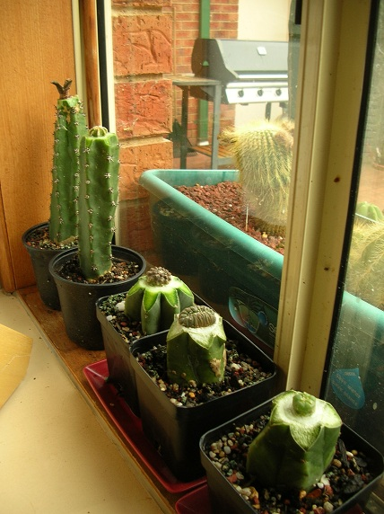 GLue method for small seedlings Fivegr10