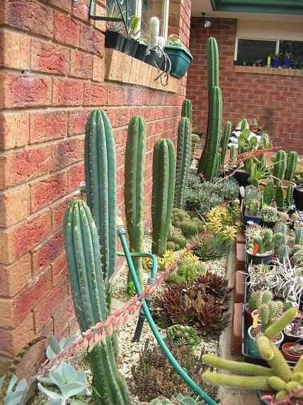 *****Spring 2011**** Post Photos of your plants  Garden10
