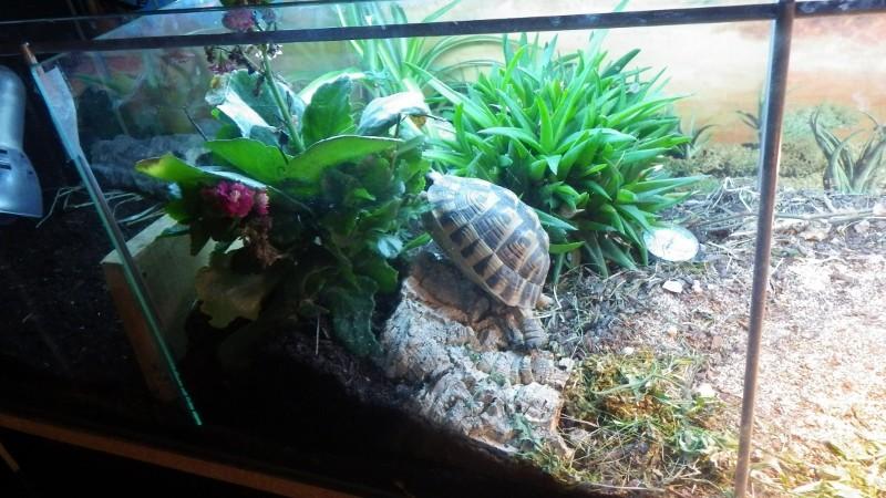 pouvez vous m'aider a identifier ma tortue Imgp1019