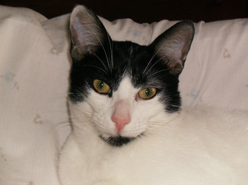 o meu gato Imagem15