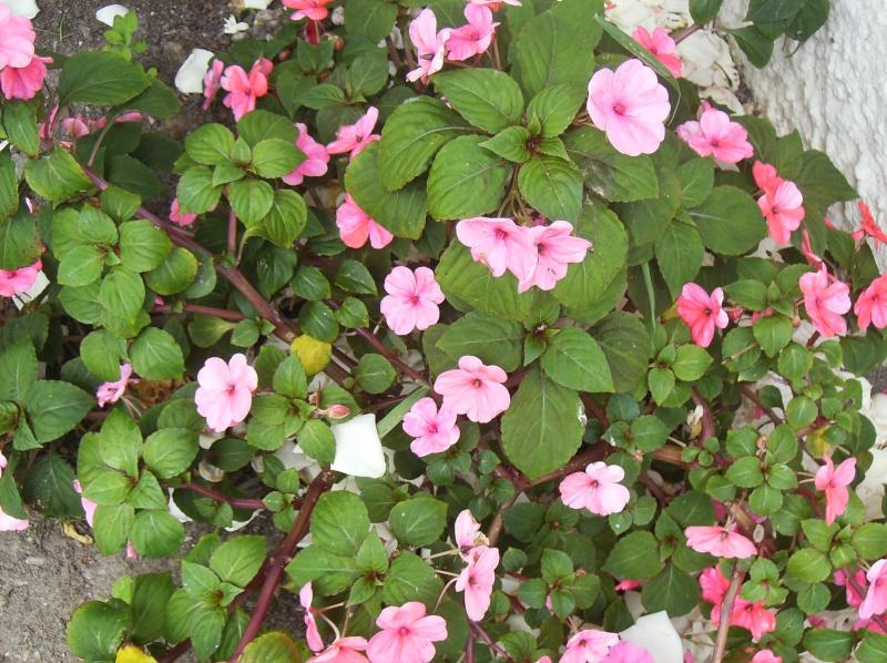 algumas flores do meu jardim Varias15