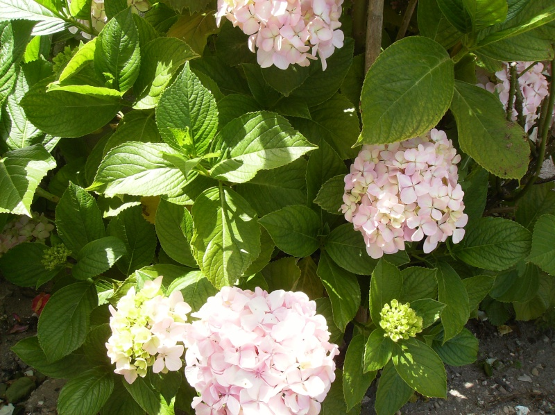 algumas flores do meu jardim Varias16