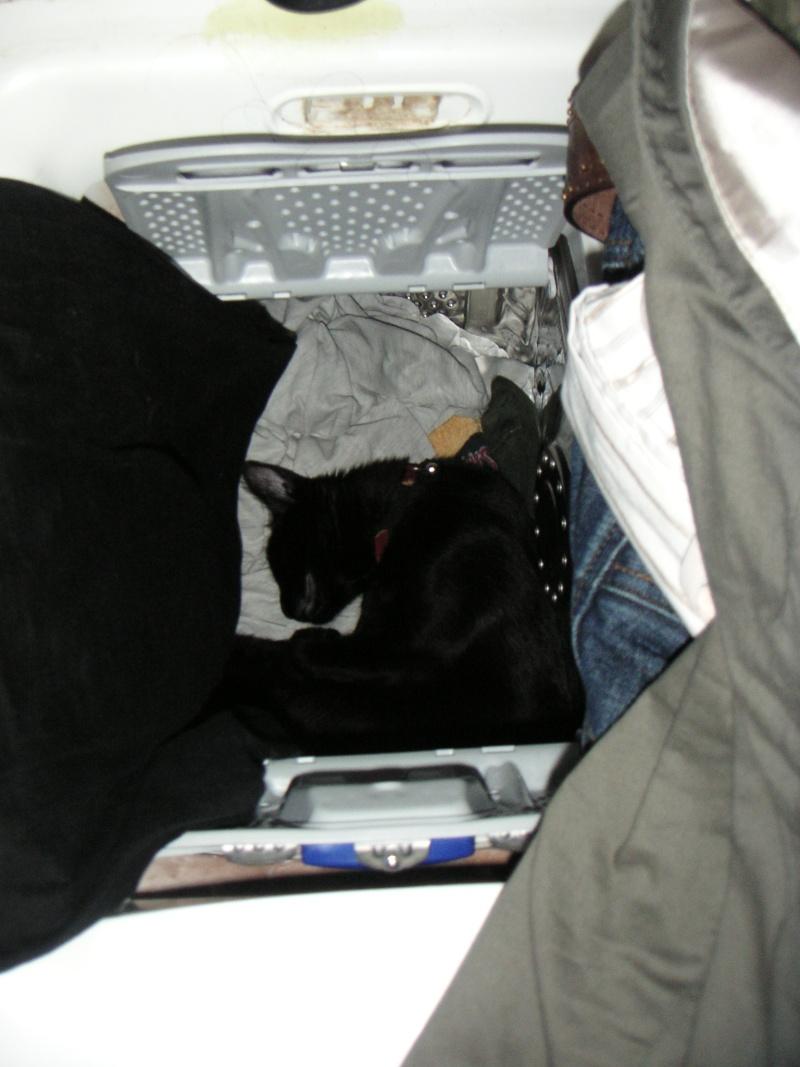 Echange de chats... - Page 3 Pict0612