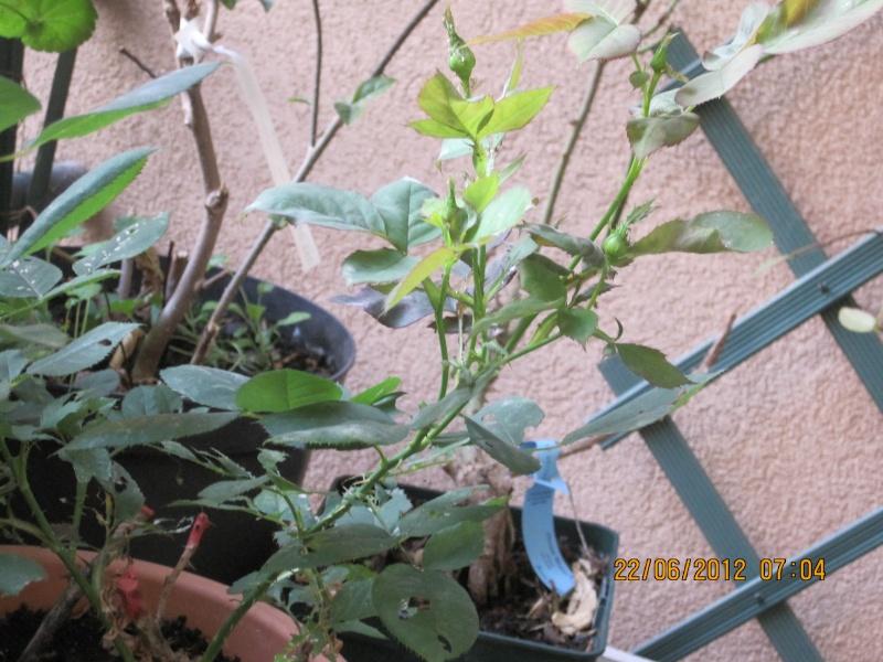 moi aussi mon jardin, il se transforme Il_fai10
