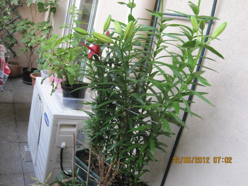 moi aussi mon jardin, il se transforme Mes_no10
