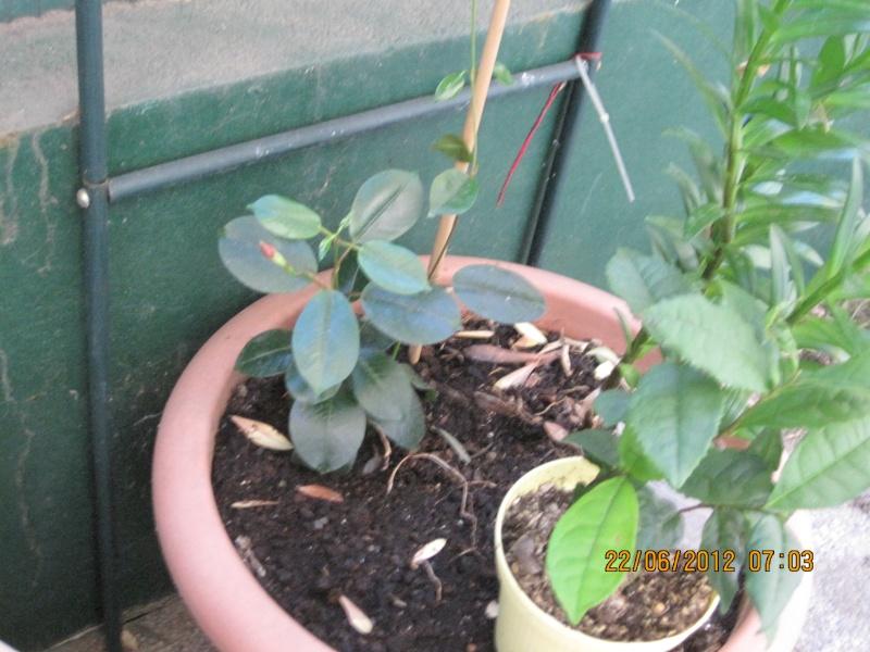 moi aussi mon jardin, il se transforme Tout_p10