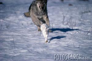 Scene Game Wolf10