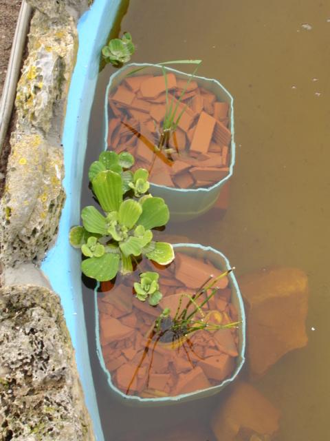 Finalmente o meu lago, vejam as fotos! Dsc01517