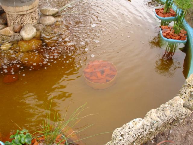 Finalmente o meu lago, vejam as fotos! Dsc01520