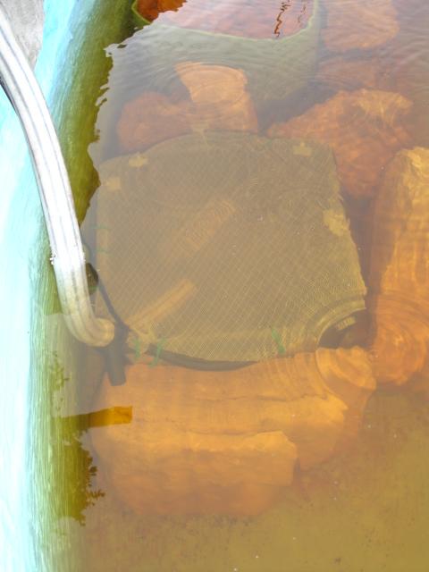 Finalmente o meu lago, vejam as fotos! Dsc01529