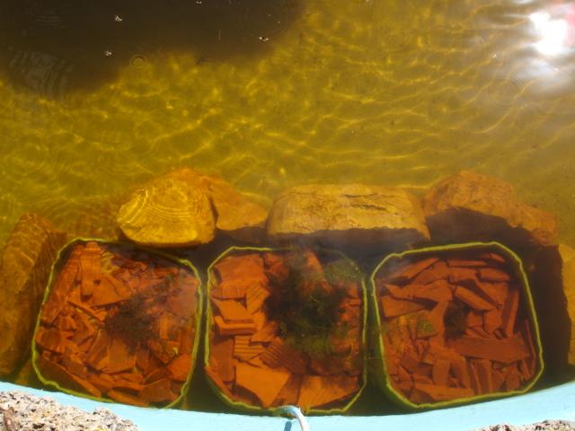 Finalmente o meu lago, vejam as fotos! Dsc01611