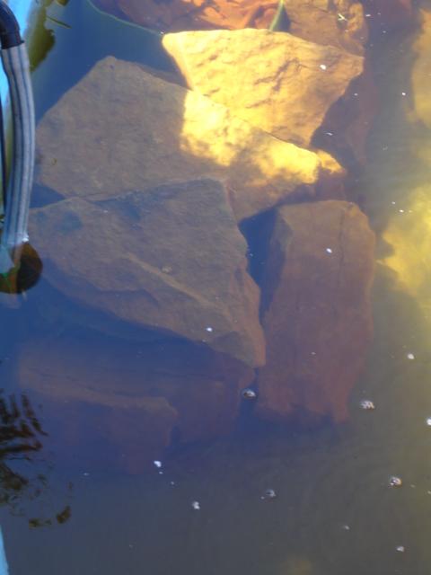 Finalmente o meu lago, vejam as fotos! Dsc01615