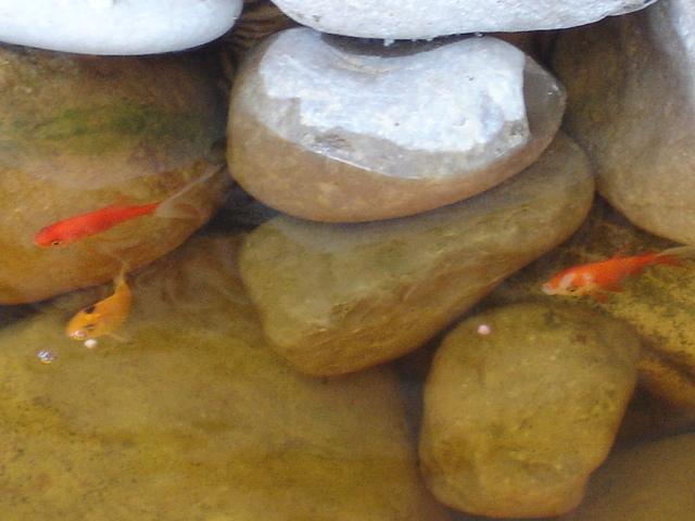 Finalmente o meu lago, vejam as fotos! Dsc01624