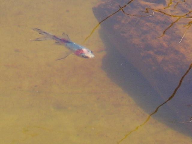 Finalmente o meu lago, vejam as fotos! Dsc01627