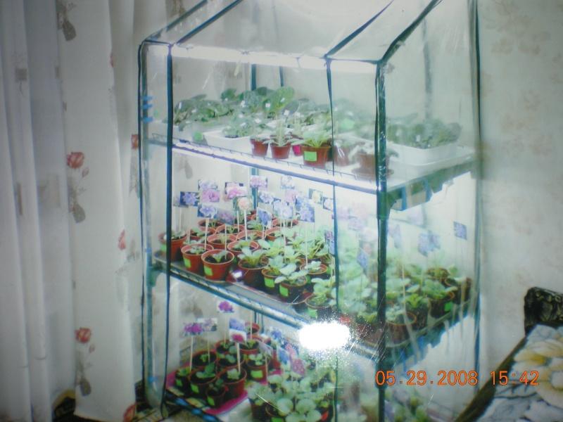 Выращивание листовых черенков в торфяных таблетках. 10901026