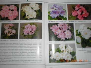 Книги о сенполиях Dscn0919