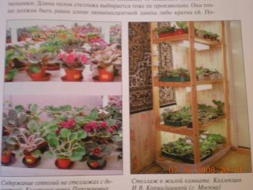 Книги о сенполиях Dscn0920