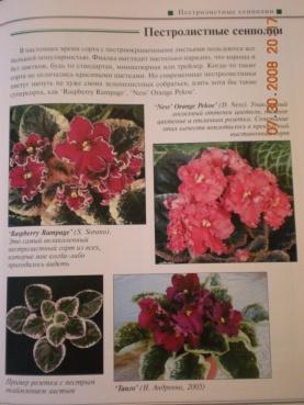 Книги о сенполиях Dscn0921