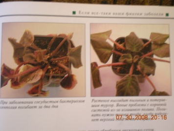 Книги о сенполиях Dscn0922