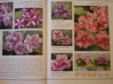 Книги о сенполиях Dscn0923