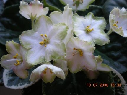 ma's lily pad Dscn1214