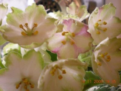 ma's lily pad Dscn1216