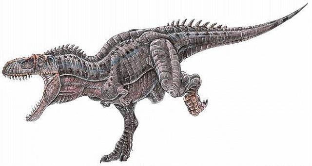Albertosaurus Albert10