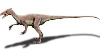 Ornitholestes Ornith11