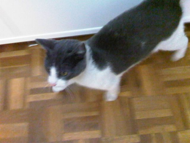 Gato casero encontrado Image400
