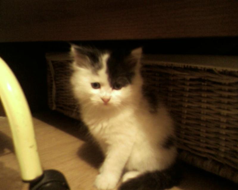 leucose: le traitement administré a mon jeune chat! Help les connaisseurs vp!! - Page 2 Sp_a0210