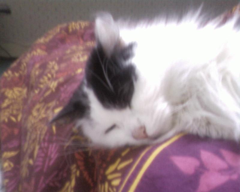 leucose: le traitement administré a mon jeune chat! Help les connaisseurs vp!! - Page 2 Sp_a0610