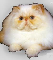 Baetender Cat Fatcat10