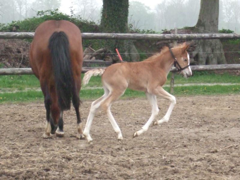 2012 fille de Pawnee et Prana des Islots!!! news photos!! 05_02_11