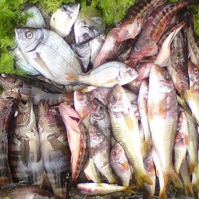 La pêche miraculeuse 48074010