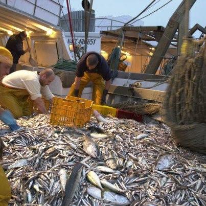 La pêche miraculeuse 53397310