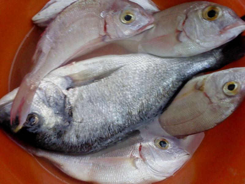 dellys et ses poissons Dsc00310