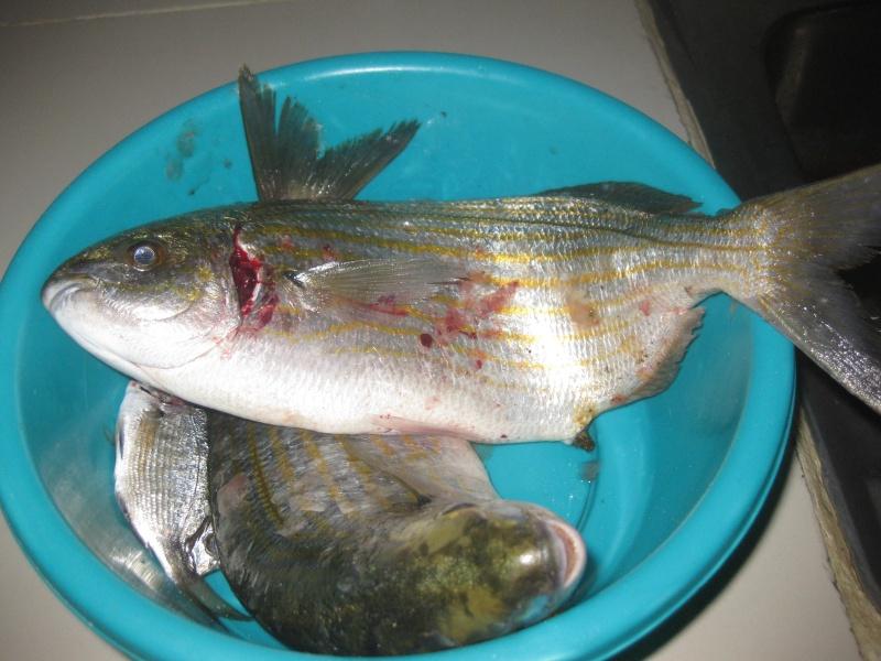 dellys et ses poissons Img_0113