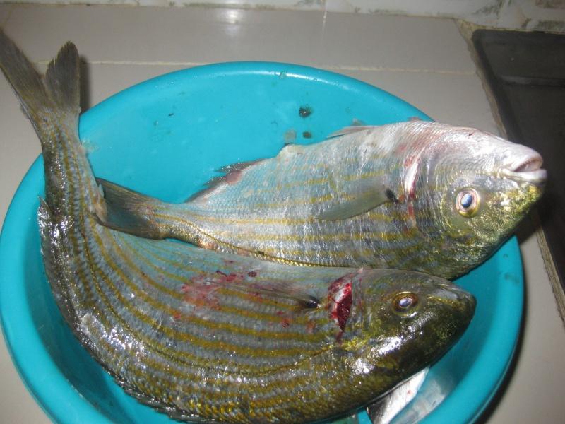 dellys et ses poissons Img_0114