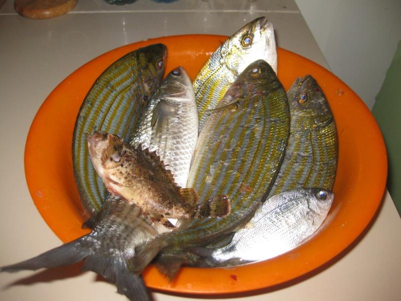 dellys et ses poissons Img_0219