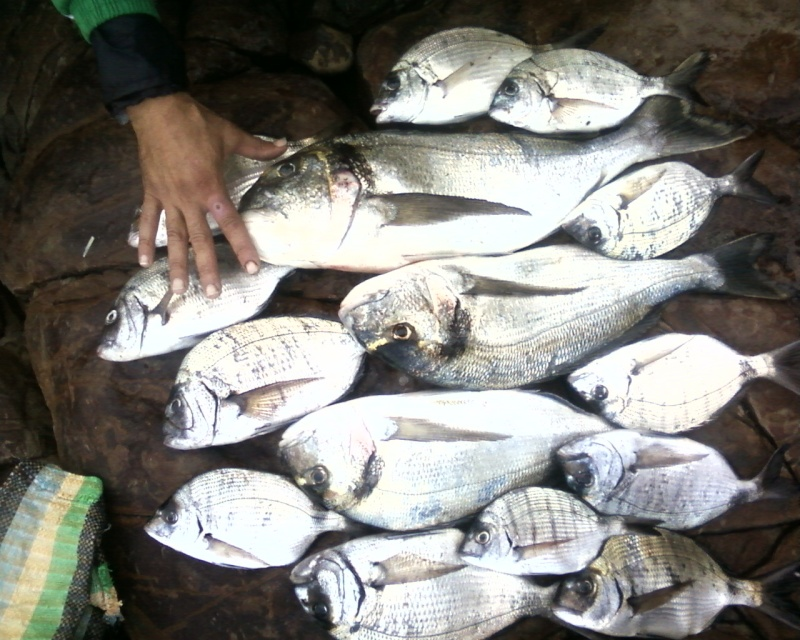 La pêche miraculeuse Photos24