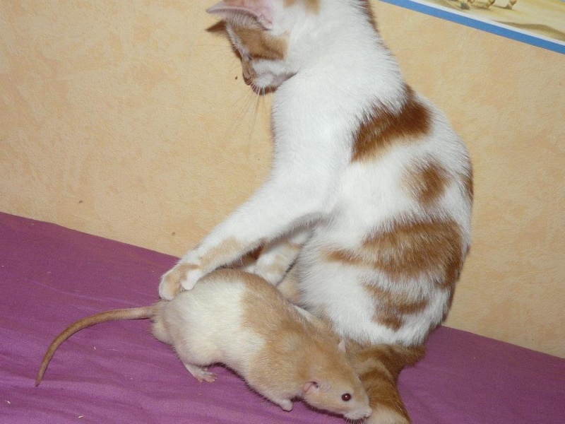 Chat/rats - Page 2 30145610