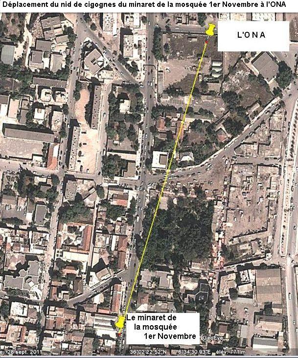 Reloger la cigogne blanche à Ain M'lila Ain_m_37