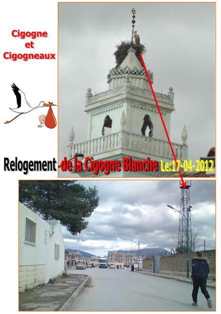 Reloger la cigogne blanche à Ain M'lila Ain_m_38