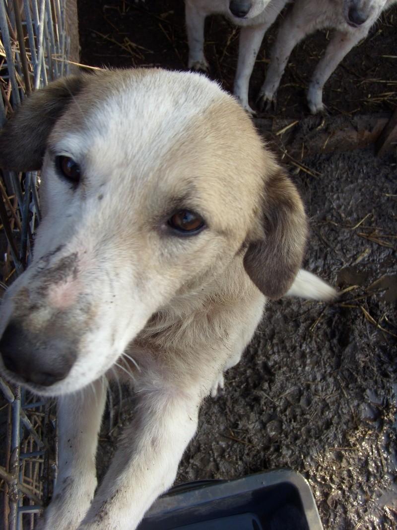 fata - FATA, née le 12/06/2009, arrivée chiot au refuge (soeur de Mickey et fille de Tara) - en FA dans le 49 - GARANT - SOS -R-FB-SC-30MA Flamme12