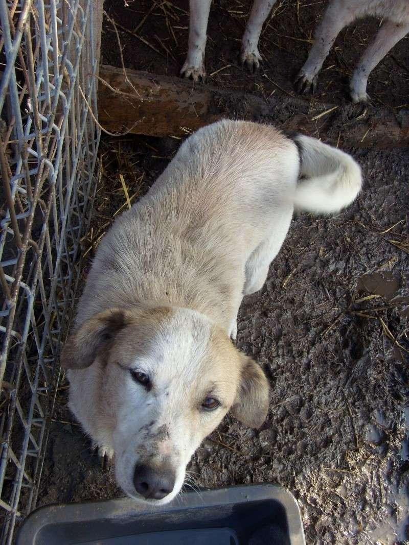 fata - FATA, née le 12/06/2009, arrivée chiot au refuge (soeur de Mickey et fille de Tara) - en FA dans le 49 - GARANT - SOS -R-FB-SC-30MA Flamme13