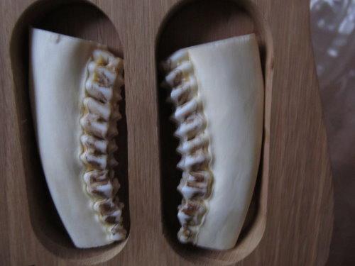 Dentition des cervidés. Img_0013