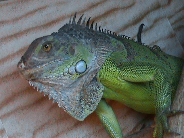 Les lézards et moi. Dsc01610
