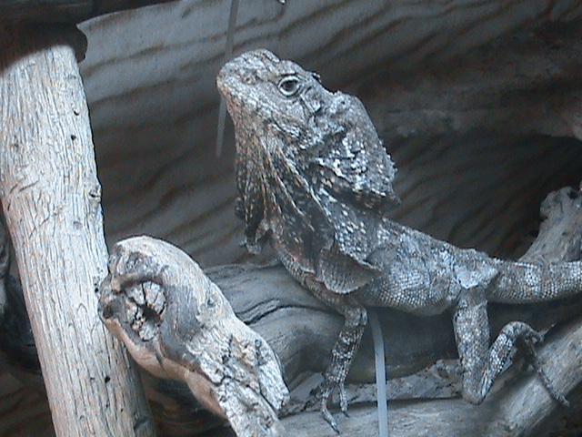 Les lézards et moi. Dsc01611