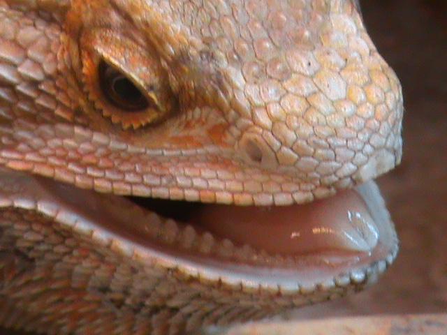 Les lézards et moi. Dsc01613