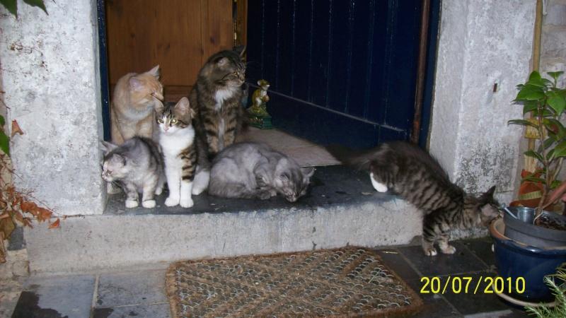 Concours photos: Le chat en vacances.... Chaton10